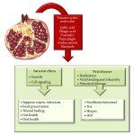 Khasiat Buah Delima: Kesan pada Bakteria dan Virus Yang Mempengaruhi Kesihatan Manusia