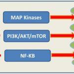 Penyelidikan: Ekstrak Delima Dan Pencegahan Kanser: Aktiviti Molecular Dan Cellular